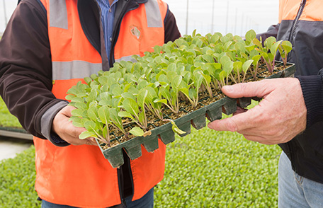 Boomaroo Nurseries Growers